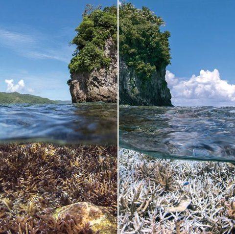 El estado de los arrecifes coralinos del mundo es cada vez más terrible.